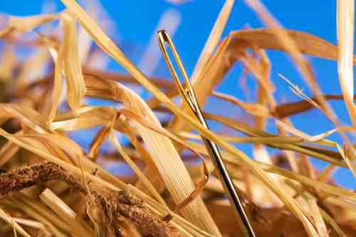 Photograph of a needle in a haystack.